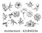 Stock vector flower set highly detailed hand drawn roses template vector 621840236