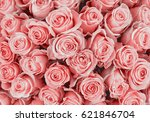 Stock photo rose background colorful rose wall background 621846704