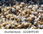 sea snails on the market of the ... | Shutterstock . vector #621849140