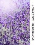 sunset over a violet lavender... | Shutterstock . vector #621859574