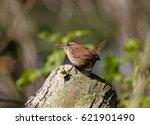 wren | Shutterstock . vector #621901490