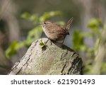 wren | Shutterstock . vector #621901493