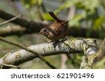 wren | Shutterstock . vector #621901496