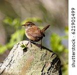 wren | Shutterstock . vector #621901499