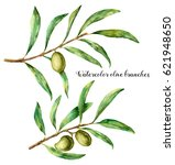 watercolor set with olive... | Shutterstock . vector #621948650