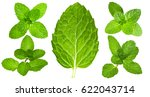 fresh mint leaves isolated.... | Shutterstock . vector #622043714