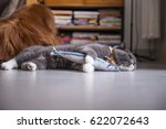 Stock photo british cat and toy fish 622072643