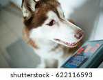 husky dog on electronic scale | Shutterstock . vector #622116593
