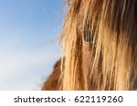 A Brown Horse With A Fair Mane...