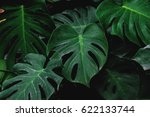 low key  green leaves of... | Shutterstock . vector #622133744
