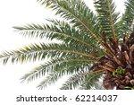 Palm Tree Low Angle View