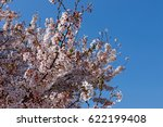cherry blossoms spring pink sky | Shutterstock . vector #622199408