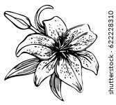 sketch floral blooming lily.... | Shutterstock .eps vector #622228310
