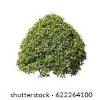 bush isolated on white... | Shutterstock . vector #622264100