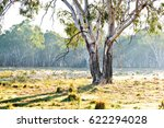 eucalyptus tree in paddock  new ... | Shutterstock . vector #622294028