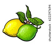 whole shiny lime and lemon with ... | Shutterstock .eps vector #622297694