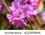 beautiful pink flowers  fresh... | Shutterstock . vector #622309844
