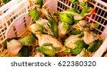 the baby birds | Shutterstock . vector #622380320