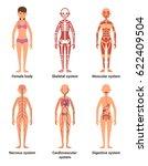 anatomy of female. vector... | Shutterstock .eps vector #622409504