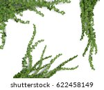 set of realistic vector ivy... | Shutterstock .eps vector #622458149