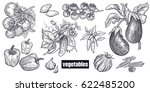 various vegetables set.... | Shutterstock .eps vector #622485200
