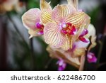 yellow  orchid flowers.... | Shutterstock . vector #622486700