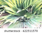 green leaves  | Shutterstock . vector #622511570