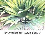 green leaves    Shutterstock . vector #622511570