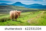 Brown Highland Cow In Scotland...