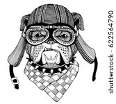 bulldog dog hand drawn image of ...   Shutterstock . vector #622564790