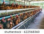 brown hen on range chicken... | Shutterstock . vector #622568360