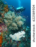 colourfull of marinelife .... | Shutterstock . vector #622589504