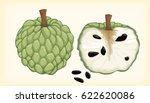 Sugar Apple Fruit Vector