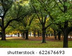 grove of trees during fall in... | Shutterstock . vector #622676693