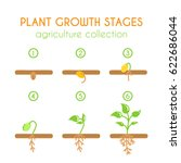 plant growth stages. growing... | Shutterstock . vector #622686044