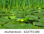 water lily on the river dnieper.... | Shutterstock . vector #622751180