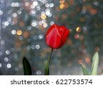red tulip on a background with... | Shutterstock . vector #622753574