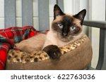 Stock photo siamese cat in cat bed 622763036