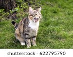 Cat Meowing In Garden