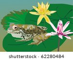illustration with green frog on ... | Shutterstock .eps vector #62280484