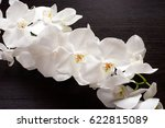 branch of white orchid flower... | Shutterstock . vector #622815089