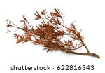 isolated tree. tree on white... | Shutterstock . vector #622816343