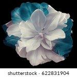 white turquoise tulip flower ...   Shutterstock . vector #622831904