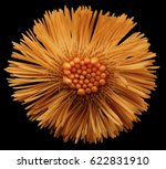 red flower  black  isolated...   Shutterstock . vector #622831910