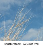 Long Dry Grass In Front Of Blu...