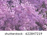 spring bloom tree with cherry... | Shutterstock . vector #622847219