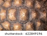 Stock photo texture of turtle carapace 622849196