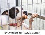Close Up Of Dog Bulldog In A...