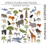 flat 3d isometric africa flora... | Shutterstock .eps vector #622896560