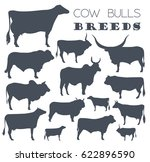 Cattle Breeding Farming. Cow ...